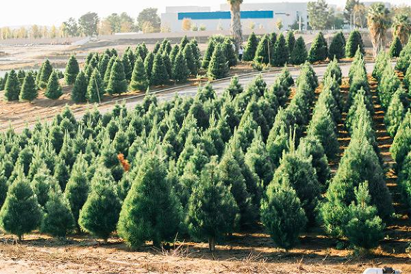 About Peltzer Pines